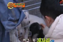 Puppies! Aww! Kids- Awww?
